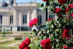 Parc et Musée de la Boverie (Liège 2019) (LiveFromLiege) Tags: liège luik wallonie belgique architecture liege lüttich liegi lieja belgium europe city visitezliège visitliege urban belgien belgie belgio リエージュ льеж parc de la boverie musée museeboverie roseraie rose roses fleurs fleur flowers museum park