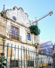Figueira na fachada do convento do carmo (Fernando Moital) Tags: évora grua convento do carmo figueira