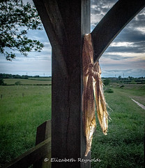 Day 153. (lizzieisdizzy) Tags: beforesundown caistorstedmunds romanfort scarf abandoned woodenstructure landscape outside outdoors lightshade fields grass trees sheep fence path pathway shelter gateway gate calm scenic scene