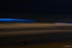 Bioluminescent Glow at Torrey Pines State Beach, San Diego (write2ashok.now) Tags: bioluminescent beach water glow blue bioluminescence bluewaves torreypines gliderport night