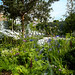 Manchester Garden, Chelsea Flower Show