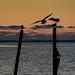 Sunrise at Tuckerton Bay