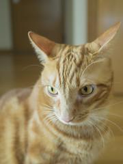 Brian (Papagueno) Tags: animals brian cat