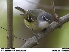 Blue-headed Vireo (Bill.Thompson) Tags: blueheadedvireo vireosolitarius oh birds