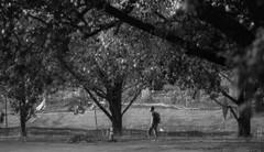 Man walking alone (among trees) (cizauskas) Tags: streetphotography decatur georgia blackandwhite monochrome canon canonfd legacylens manualfocus fotodiox