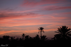 Evening shadows setting in (Irina1010) Tags: sunset evening clouds pink sky beautiuful palmtrees silhouettes oarzazate morocco 2019 nature canon ngc coth5 npc