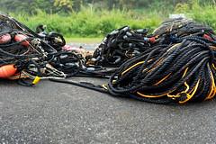 Ropes (Bracus Triticum) Tags: ropes kōchiprefecture 高知県 shikoku 四国 日本 japan bicycletriparoundshikoku 4月 四月 卯月 shigatsu uzuki unohanamonth 2019 平成31年 spring april