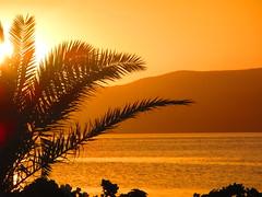 sunset palm - Poros Island, Greece (jeffglobalwanderer) Tags: poros island greece greekislands aegeansea sunset shoreline coastline water sea palmtree reflection sunsetglow