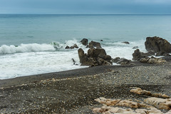 Hane Cape Shore (Bracus Triticum) Tags: hane cape shore kōchiprefecture 高知県 shikoku 四国 日本 japan bicycletriparoundshikoku 4月 四月 卯月 shigatsu uzuki unohanamonth 2019 平成31年 spring april