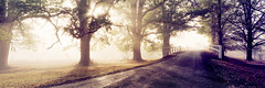 Sunburst (rubberducky_me) Tags: nsw country australia fog sun road trees fall autumn gold yellow bridge linhoftechnorama617iiis linhof technorama provia colourreversal film panorama 31