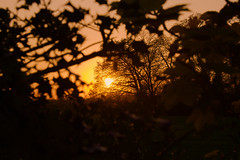 Sunsets and silhouettes 2 (benmoranphotography) Tags: sunset silhouette plant nature layers landscape photography