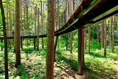 Whiting Forest Canopy Walk (dangaken) Tags: whitingforestcanopywalk fujixt2 fujifilm fujinon fuji midland greatlakesbay midlandmi mi mich midlandcounty dowfoundation herberthdowhome dowgardens dowgardensandwhitingforest forest tree nature green spring summer puremichigan outdoorsoutsidesunny dayspringsummergo great lakes baytricitiestricities michiganhikewalk woodscanopywoodscanopy walk