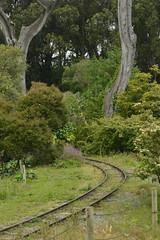 Train Tracks (JustinPhiIIips) Tags: sf zoo san francisco explore adventure nikon d3200 outdoors animal animals natural light vertical train tracks nature