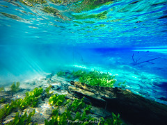 Cypress Spring (J. Parker Natural Florida Photographer) Tags: gopro underwater water spring panhandle floridapanhandle paddle paddling kayaking holmescreek cypressspring nature waterscape color colorful vernon florida