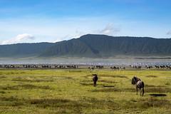 _DSC4167 (Viajar Code: Veronica) Tags: au ave bird flamenc flamenco flamingo gnu gnú ngorongoro nyu ocell pajaro pájaro wildebeest ñu