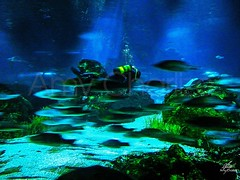 Fast (Amy Charlize) Tags: amycharlize focosocial fishes water underwater sea