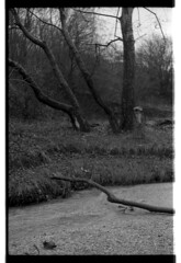 River (shinrinyoku) Tags: russia river hardwaresp hardware forest spring nature ilford pentax pentacon sp spotmatic hp5 landscape white bw blackandwhite blackandwhitefilm analogue analog black 35mm film