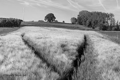 2019-6-2 Landschap 109 © (Jacques Sper) Tags: landschap landscape geraardsbergen zw bw outdoor oostvlaanderen