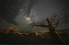 **DEEP INTO THE NIGHT** (Rich Zoeller Photography) Tags: richzoeller zoeller thatkidrich nyphotographer astrophotography milkywaygalaxy milkyway nightphotography explore deathvalley naturesbeauty naturephotography nationalgeographic trees landscapephotography