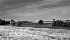 2019-6-2 Landschap 101 © (Jacques Sper) Tags: landschap landscape geraardsbergen zw bw outdoor oostvlaanderen