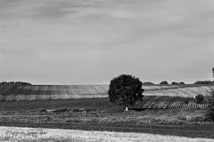 2019-6-2 Landschap 102 © (Jacques Sper) Tags: landschap landscape geraardsbergen zw bw outdoor oostvlaanderen
