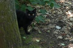 IMGP7029 (hlavaty85) Tags: praha prague klánovice čarodějnice kočka cat black černá