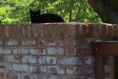 IMGP7027 (hlavaty85) Tags: praha prague klánovice čarodějnice kočka cat black černá