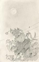 Moon & vine. (Bohdan Tymo) Tags: pencil pencildrawing drawing moon grape vine evening