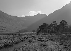 I do love a good clump of trees! (Jonathan Woods Photography) Tags: ebony sv45te large format film 5x4 ilford delta 100 sheet landscape buttermere lake district sun trees mountains