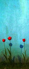 the flower of my neighbor (yakkay43) Tags: dithmarscher teller
