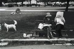 little things (Giorgos Voulgaris) Tags: nikonem film 35mm bw blackwhite ilford hp5 hp5plus 400 people reading newspaper dogs outddors monochrome analog street streetphotography corfu