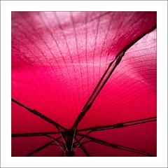red umbrela (Francisco (PortoPortugal)) Tags: 1022019 20190129foli0738m quadrada square vermelho red guardachuva umbrela estrutura structure