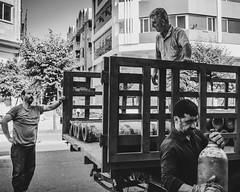 workers (M0jTabA ZiA) Tags: blackwhite bw blackandwhite people monochrome mazandaran streetphotography street workers canon lightroom
