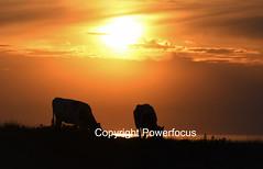 Diner @ Sunset (powerfocusfotografie) Tags: backlight silhouette dusk action running sun sunset evening outdoors landscape groningen holland henk nikond90 powerfocusfotografie