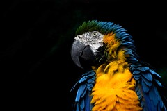 Macaw Parrot (mkumar.photographer001) Tags: