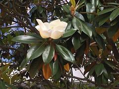 IMG_7775 (Бесплатный фотобанк) Tags: россия краснодарскийкр сочи лето солнце цветение цветок краснодарскийкрай