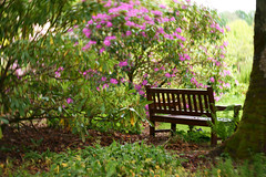 Sitting with the flowers (Elisafox22) Tags: elisafox22 sony nex6 lensbaby composerpro optic twist60 tree hbm bench sitting flowers rhododendrons pink swirl bokeh spring outdoors fyvie fyviecastle fyvieloch aberdeenshire scotland elisaliddell©2019
