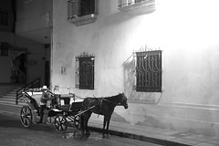 The Night Carriage (peterkelly) Tags: digital canon 6d bw northamerica mexico gadventures mayandiscovery yucatán mérida street road horse carriage wall window lamp light evening night