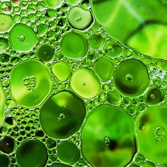 Kal-oil-id-eau-scope (Le.Patou) Tags: challenge macromondays oilonwater fz1000 oil water effect closeup macro grass huile eau