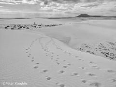 Fuerteventura - El Jable (peterkaroblis) Tags: fuerteventura eljable corralejo dünen dunes dunas islascanarias canaryislands sand espana spanien spain blackandwhite schwarzweis blancoynegro