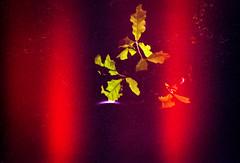 Fuite de lumière 2 (herbdolphy) Tags: analog analogique argentique pellicule 35mm film filmphotography filmisnotdead expiredfilm expired konicapop grain