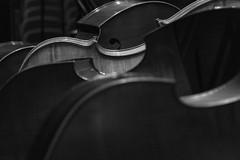 Acumulación de contrabajos (Guillermo Relaño) Tags: guillermorelaño sonya7 a7iii a7m3 teatro nuevoapolo camerata musicalis tchaikovsky cuarta 4 sinfonia ensayo byn bw blackandwhite blancoynegro contrabajo especial ¿porqueesespecial