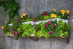 Planter Box 0270 (casch52) Tags: window flower box wall plant home house architecture exterior beautiful building glass decoration frame outdoor green planter red floral background garden illustration summer design nature colorful decor pot blooming beauty color white bloom outside windowbox residential modern spring fresh pink foliage canon eos rp