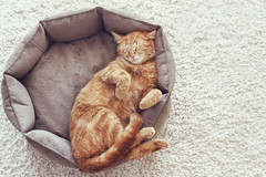 Cat sleeping (Trusted_Team) Tags: sleeping red orange pet cute home animal closeup comfortable cat pose carpet ginger warm soft basket floor adorable kitty rest resting comfort lovable up relax cozy high bed feline funny nap close top fluffy ukraine lying