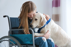 Girl in wheelchair with service dog indoors (Trusted_Team) Tags: affection animal assistance background breed canine care caucasian child childhood companion cute disabled dog domestic equipment friend girl golden handicapped health help home hugging impairment indoors invalid kid lifestyle medical owner paralysis pedigree person pet problem purebred rehabilitation retriever service support teen teenager trained transport transportation vehicle wheelchair ukraine