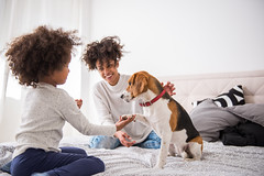 Playing with pet (Trusted_Team) Tags: african american beagle beautiful bed bedroom care child childhood crazy cute daughter dog family friends fun funny girl happiness happy home joy kid laughing little love lying parent parenting people pet playing puppy small smile smiling toddler together white young mom mother motherchild motherhood woman female serbia