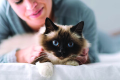 Cuddly cat on the bed (Trusted_Team) Tags: woman cat home bed bedroom girl smiling pet feline kitty fluffy soft beloved owner relax young happy cute pretty bedding birman animal cuddling hugging touching love loving togetherness expressingpositivity enjoyment enthusiasm enjoying relaxing fur lovable lovely adorable purring pussy pajamas italy