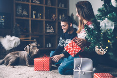 Laughing couple with presents and dog (Trusted_Team) Tags: christmas couple dog home presents decorated celebration pet care firtree holiday sitting domestic carpet decoration stroke cheerful happiness winter indoors cozy young xmas love family together relationship apartment horizontal copyspace spain