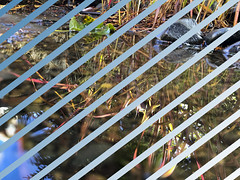 pinstripes (Keagan O) Tags: bridgepreferenceslabelgreenapproved photoshop color lines shapes invert
