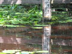 IMG_0698 watermarker (belight7) Tags: burnham beeches uk nature england pond